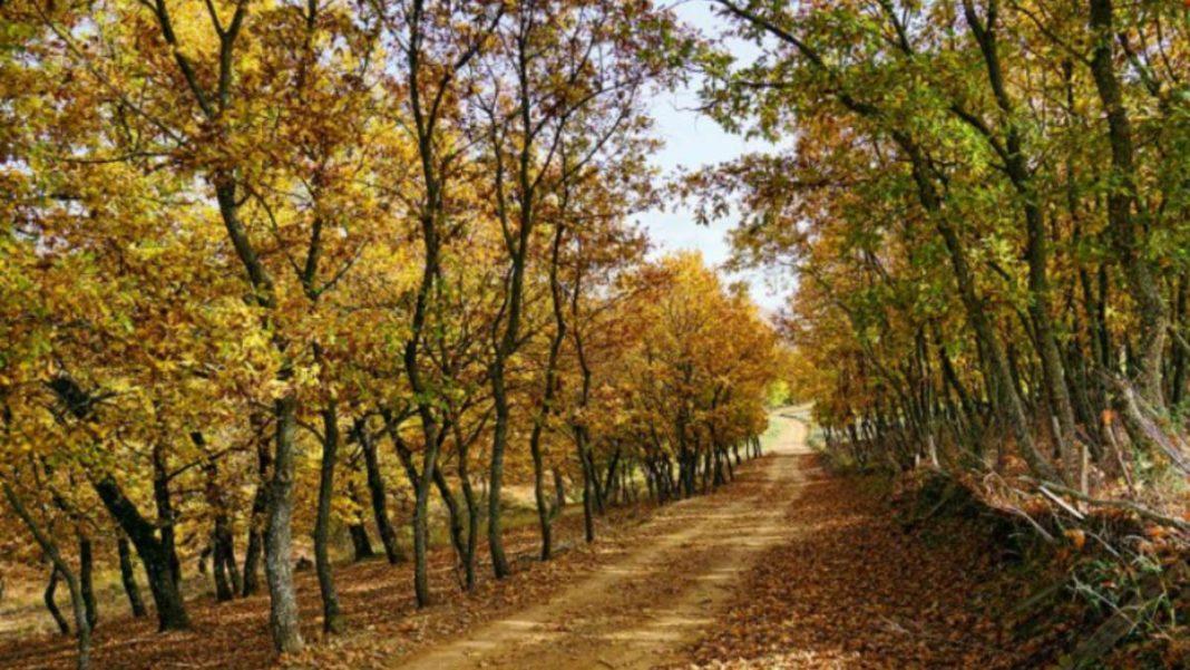 Δάσος Φολόης, Πελοπόννησος