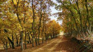 Δρυόδασος Φολόης: Βόλτα σ' ένα από τα μεγαλύτερα δάση βελανιδιάς και από τα λίγα σε ολόκληρη την Ευρώπη!