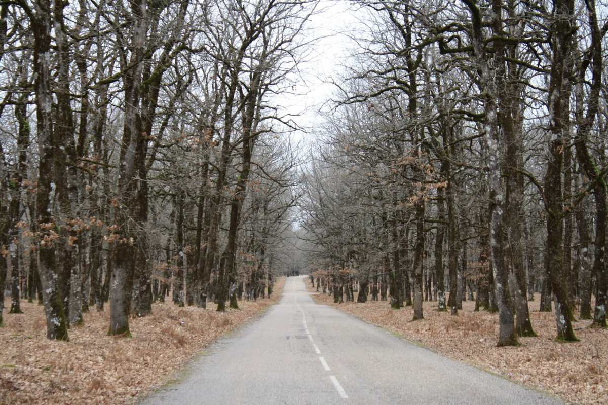 Στο δάσος Φιλόης, Πελοπόννησος