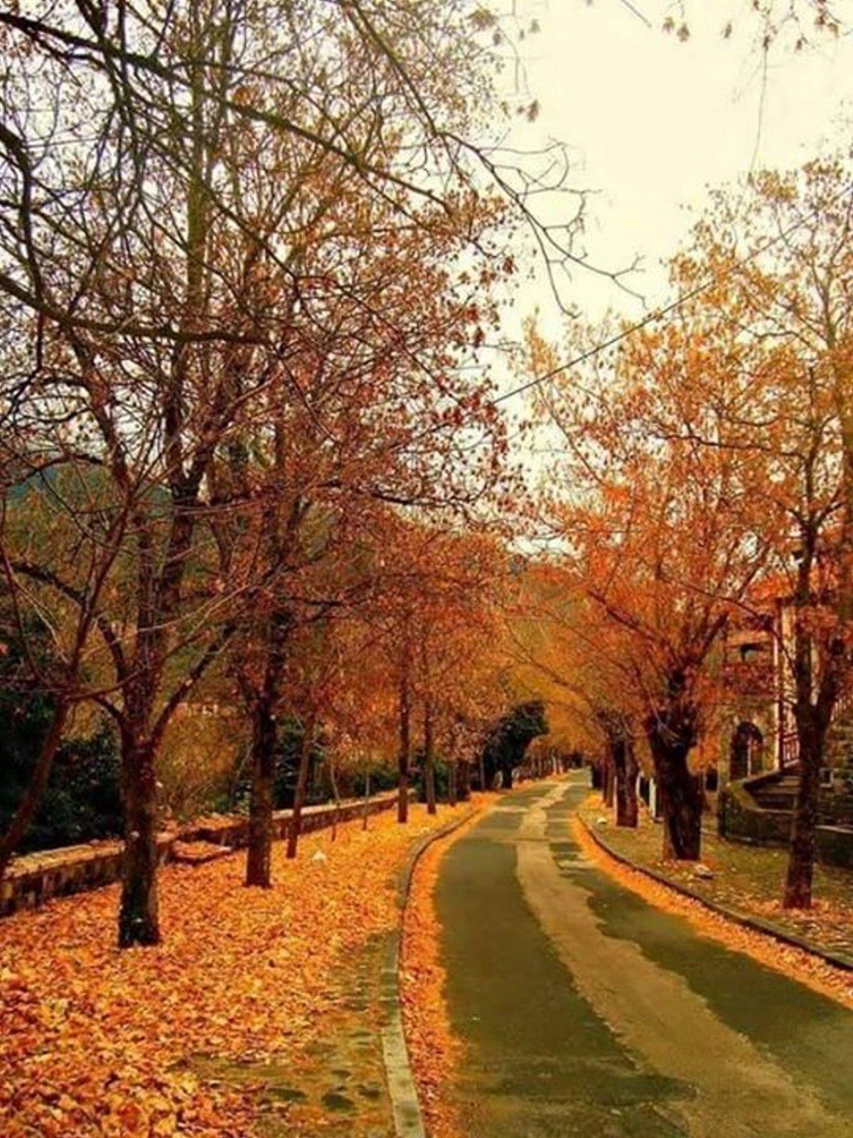 Δρόμος της αγάπης Βυτίνα με φθινοπωρινά χρώματα 2 ώρες από την Αθήνα