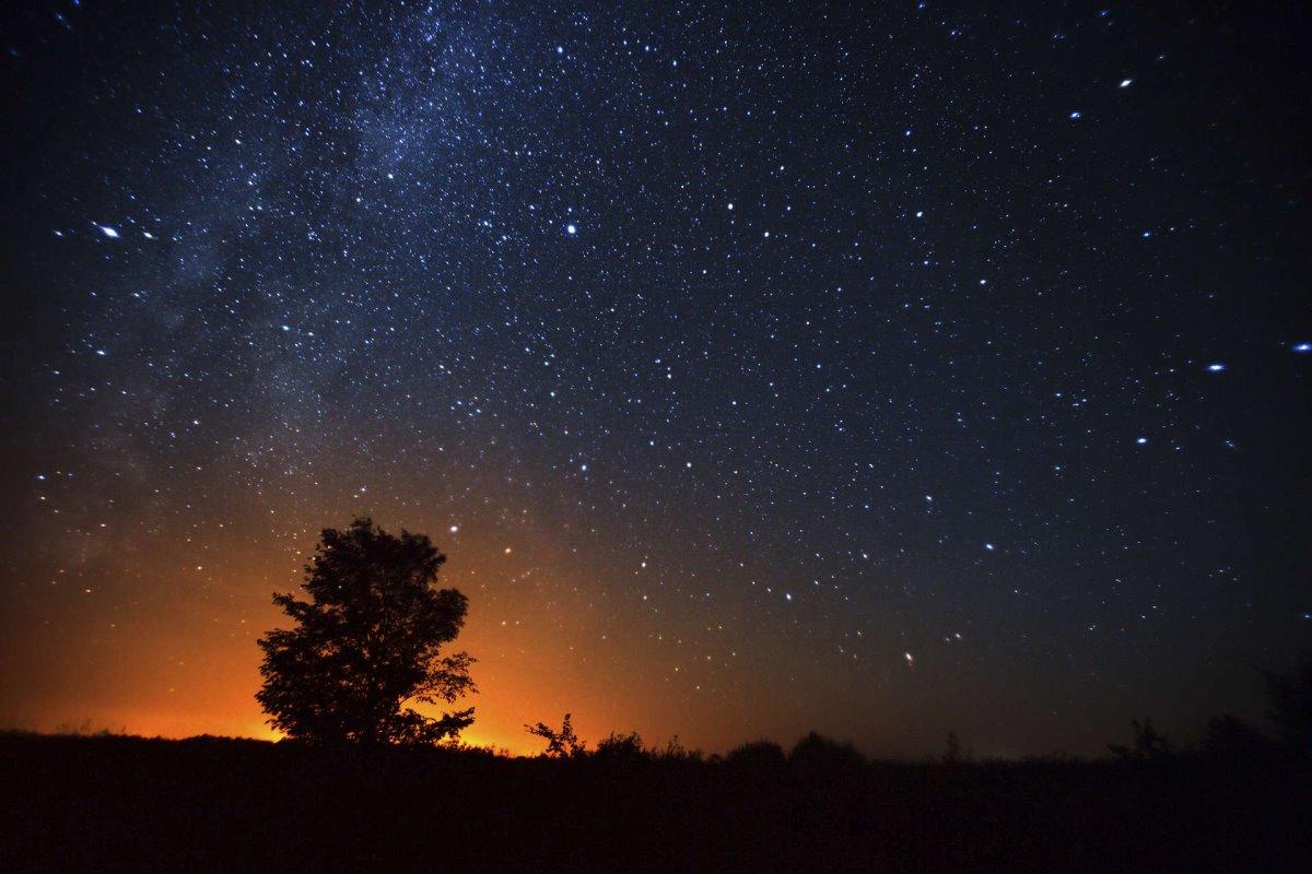 Κύπρος έναστρος ουρανός δέντρο