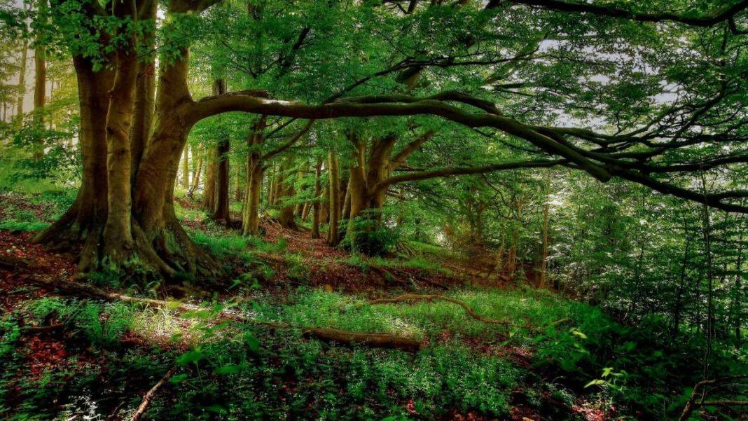 δάσος πράσινα δέντρα και κορμοί