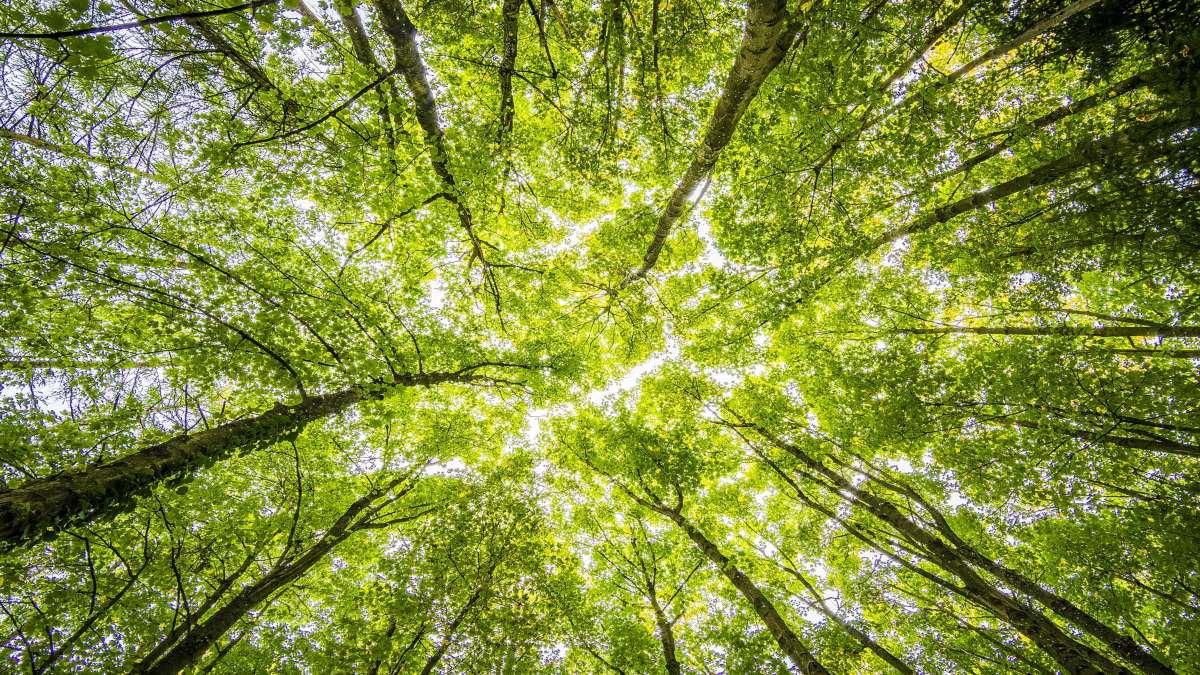 δάσος ήλιος μέσα από πυκνό φύλλωμα δέντρων