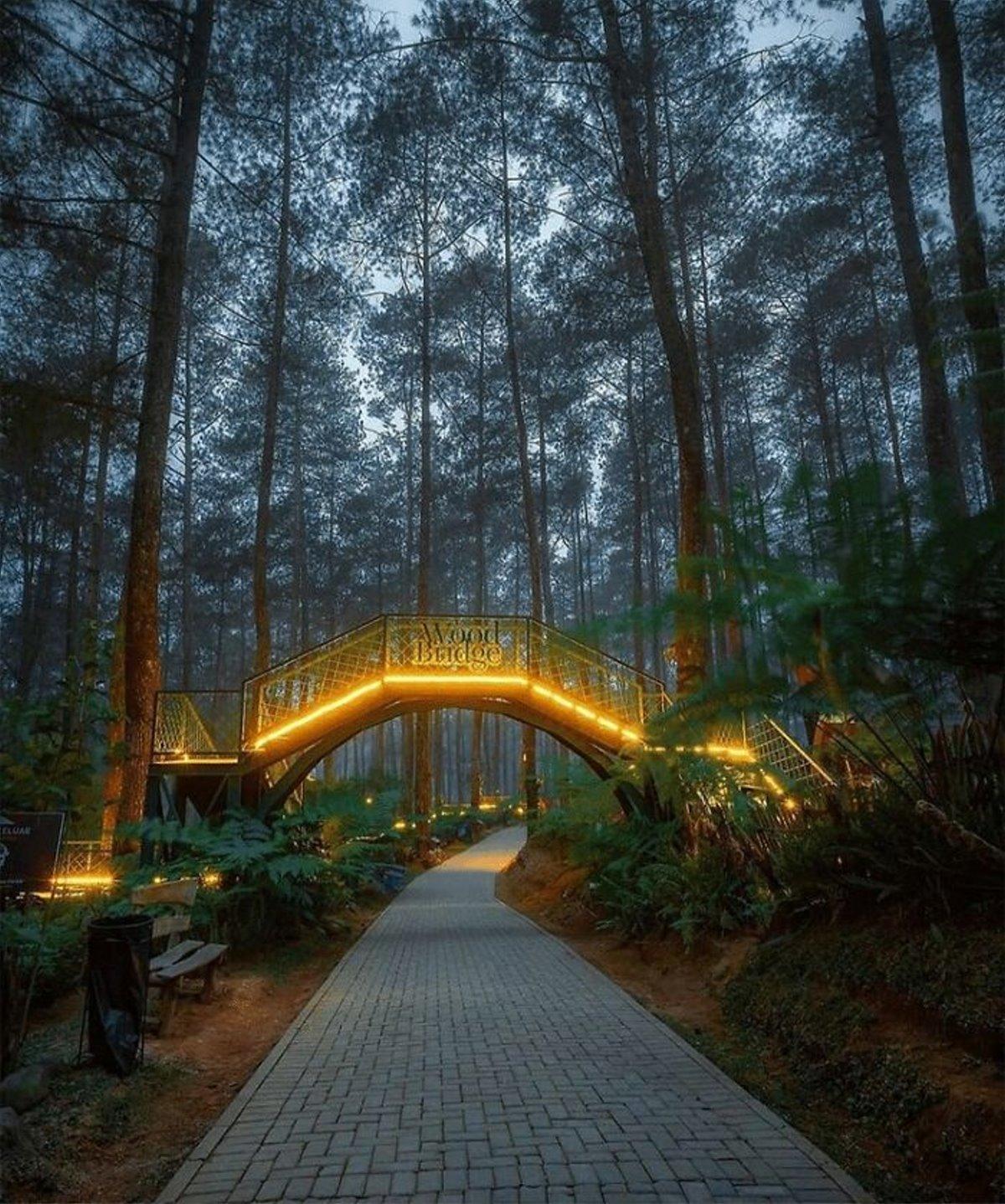 Ινδονησία φωτιζόμενη γέφυρα στο δάσος Orchid Forest κοντινή λήψη το βράδυ