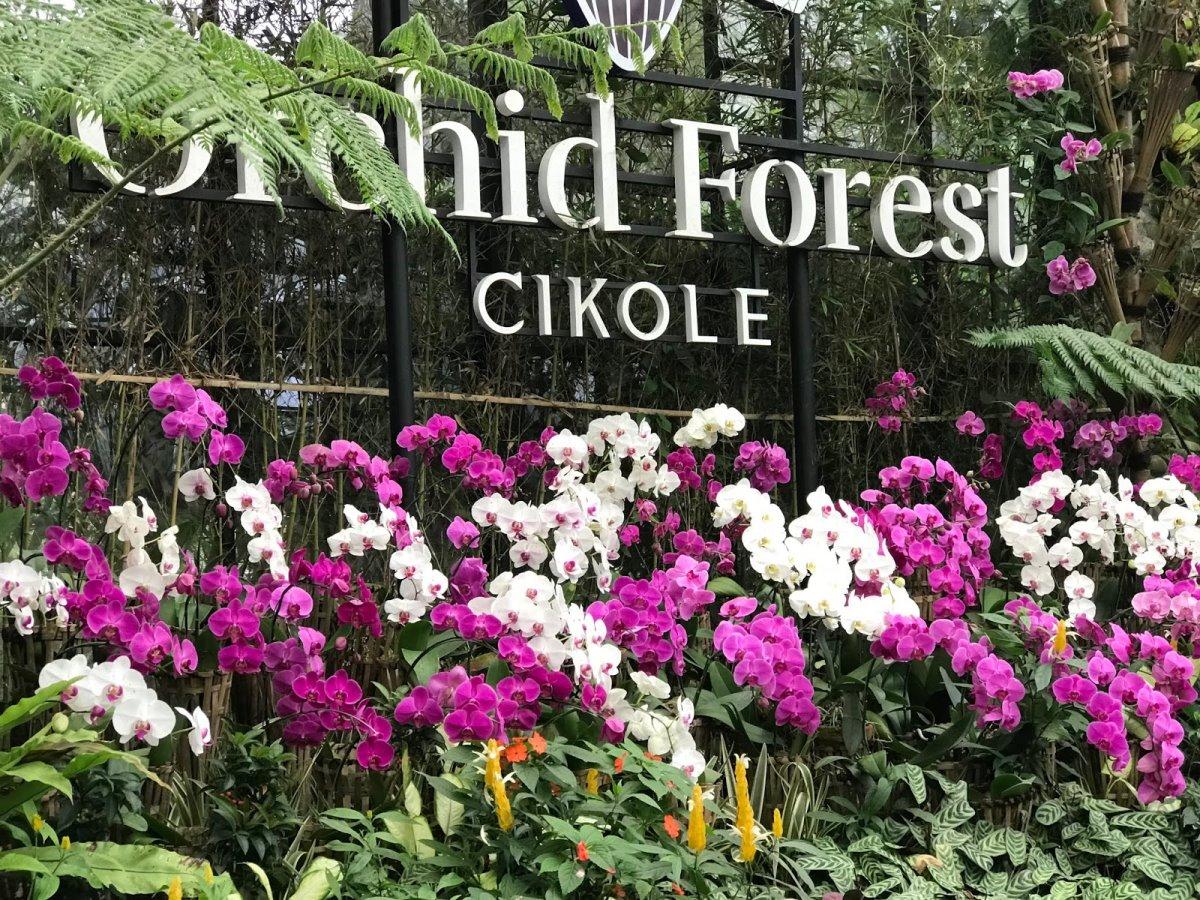 Ινδονησία φωτιζόμενη γέφυρα στο δάσος Orchid Forest η είσοδος στο δάσος