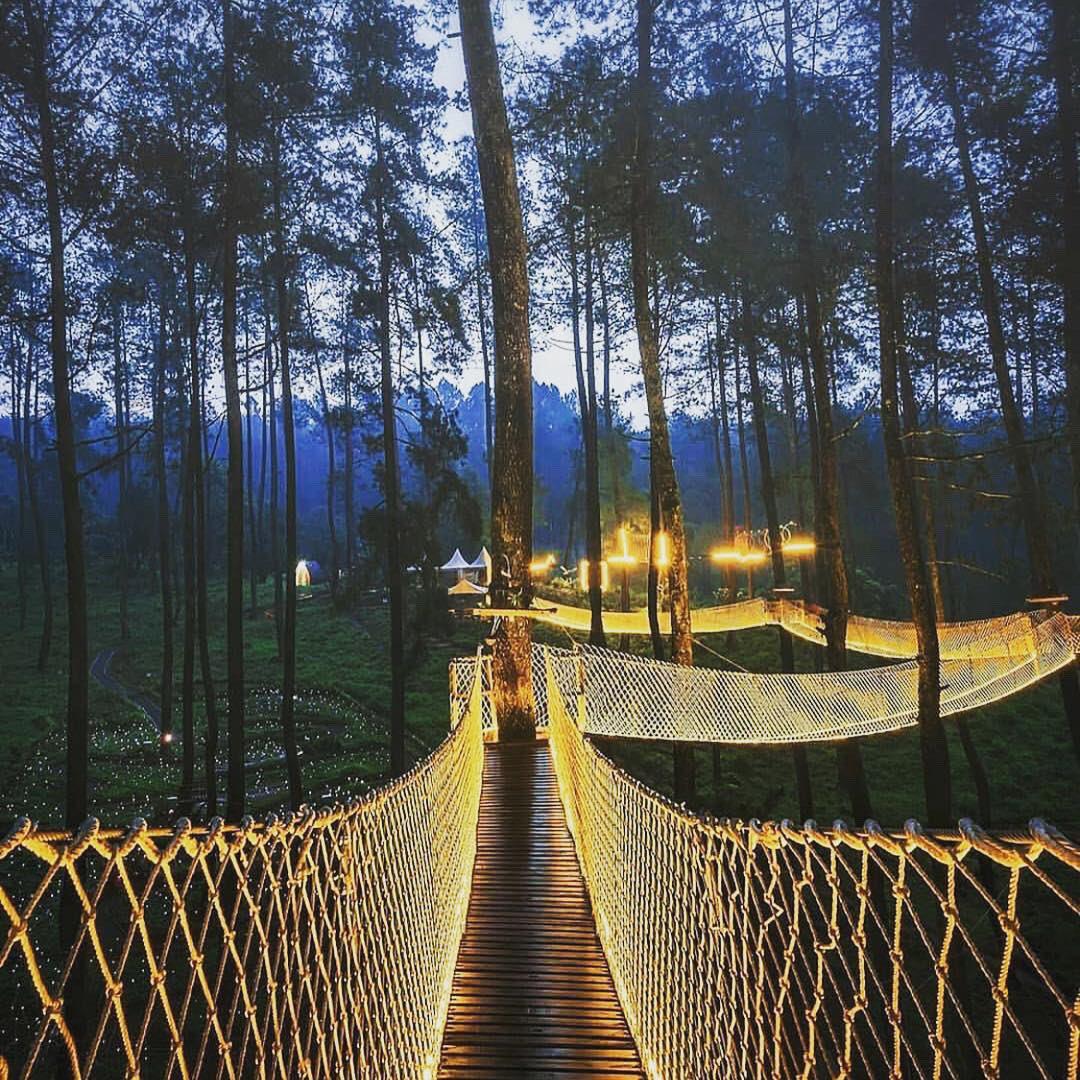 Ινδονησία φωτιζόμενη γέφυρα στο δάσος Orchid Forest