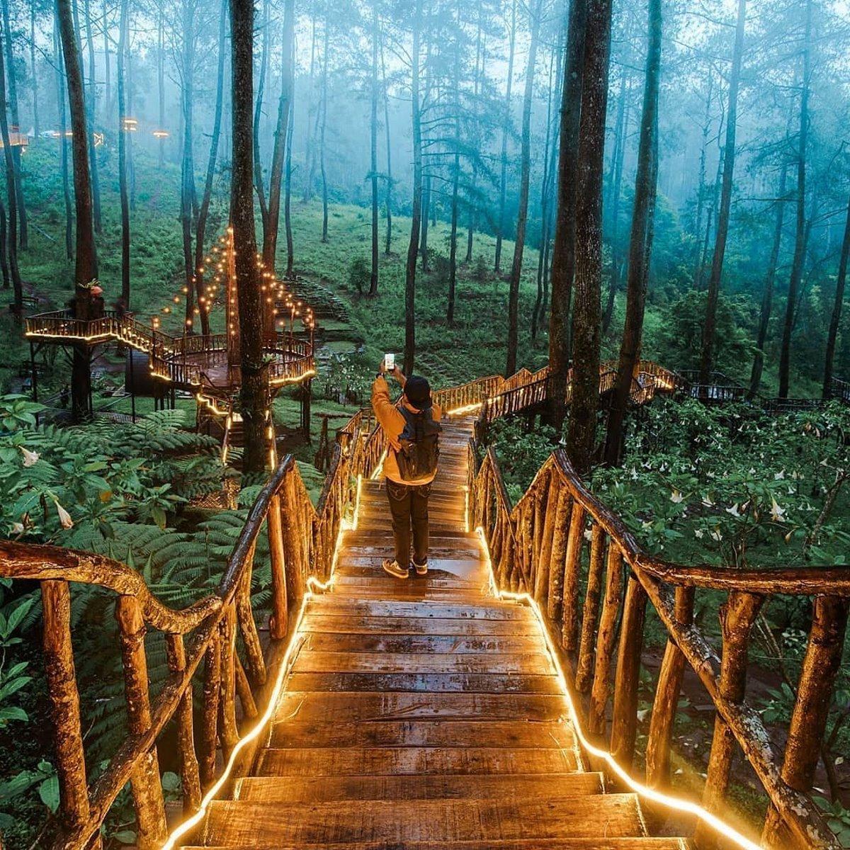 Ινδονησία φωτιζόμενη γέφυρα στο δάσος Orchid Forest τουρίστας βγάζει φωτογραφίες