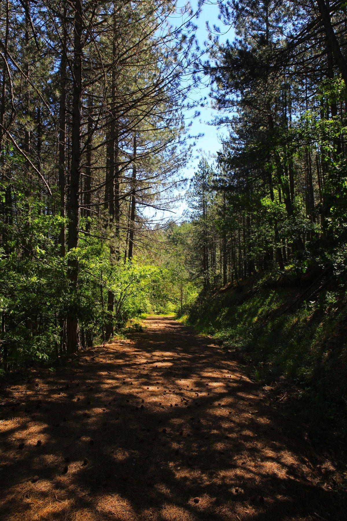 Η Κρανιά στα Γρεβενά υπέροχο τοπίο στο δάσος και ξενώνας