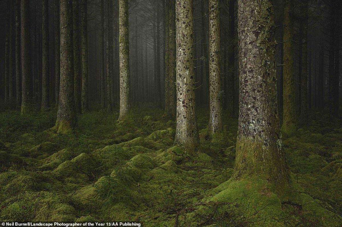 φωτογραφία φύση διαγωνισμός δάσος