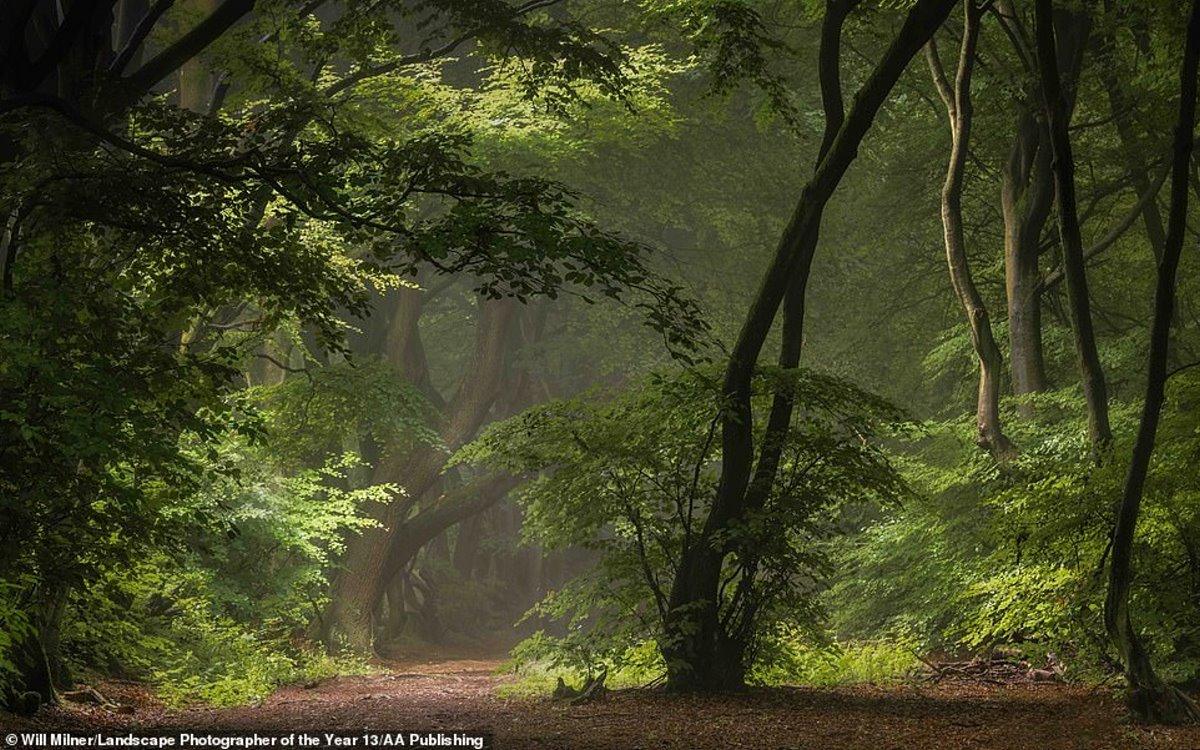 φωτογραφία φύση διαγωνισμός καταπράσινο δάσος