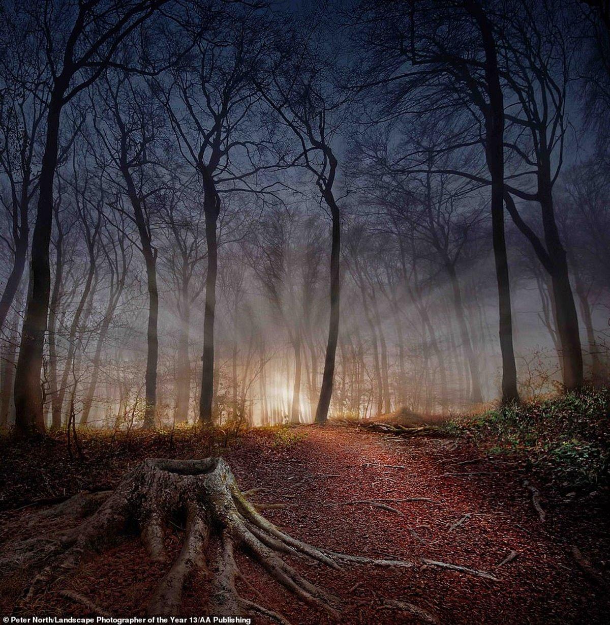 φωτογραφία φύση διαγωνισμός κορμοί δέντρων