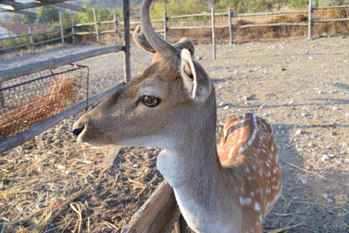 Lasinthos Eco Park Λασίθι φάρμα με ζώα και ελάφια