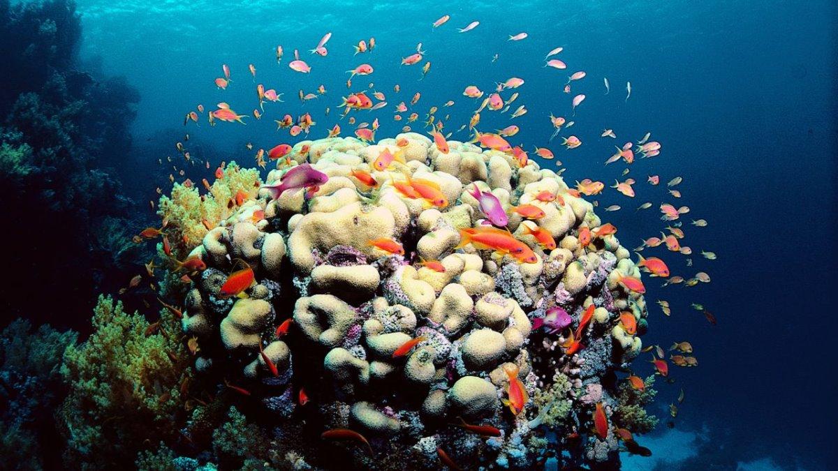 Μεγάλος Κοραλλιογενής Ύφαλος κοράλλια και ψάρια