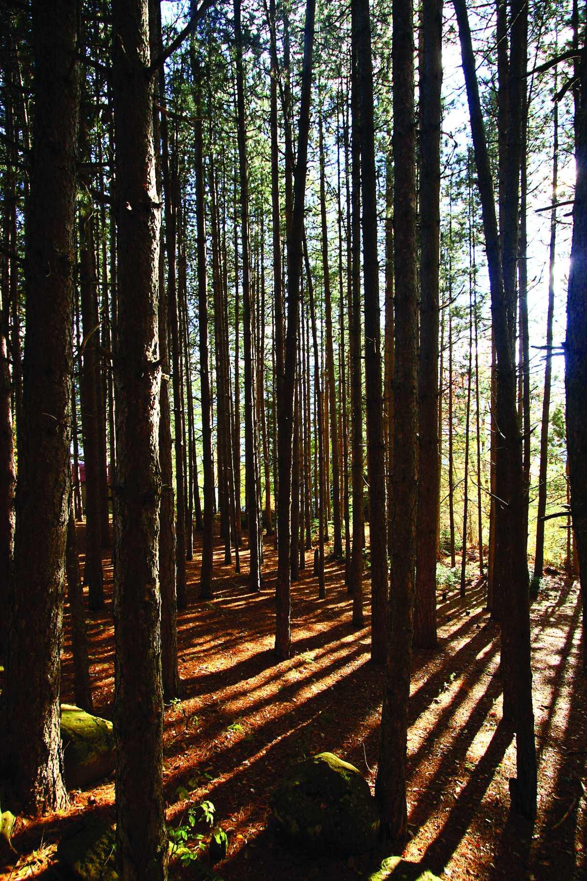 Νεραϊδοχώρι Τρικάλων,δάσος στο χωριό