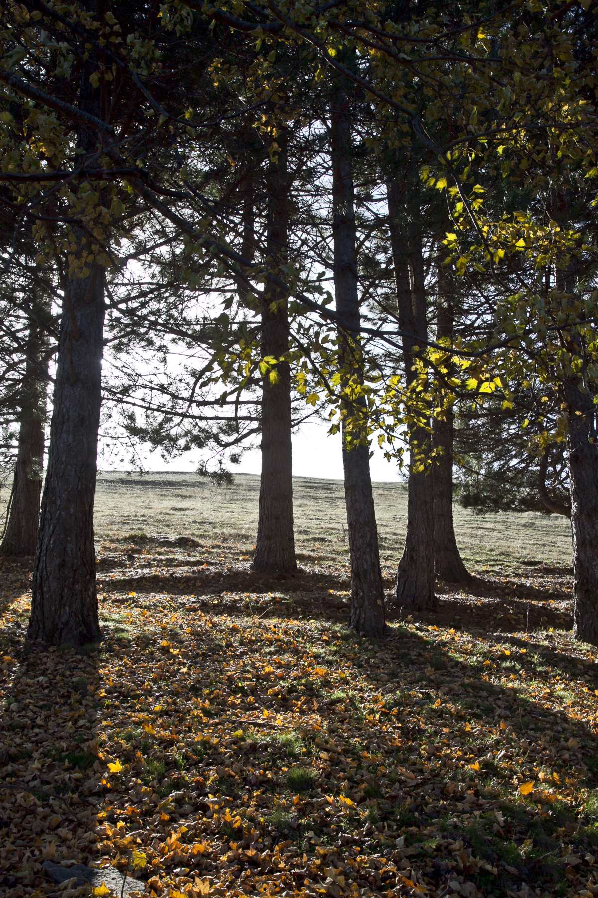 Στο δάσος, Νυμφαίο