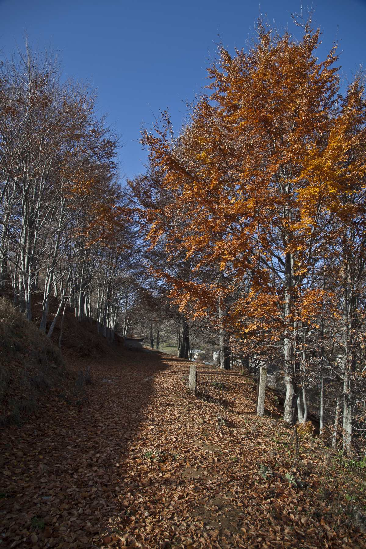 Φθινοπωρινές εικόνες, Νυμφαίο