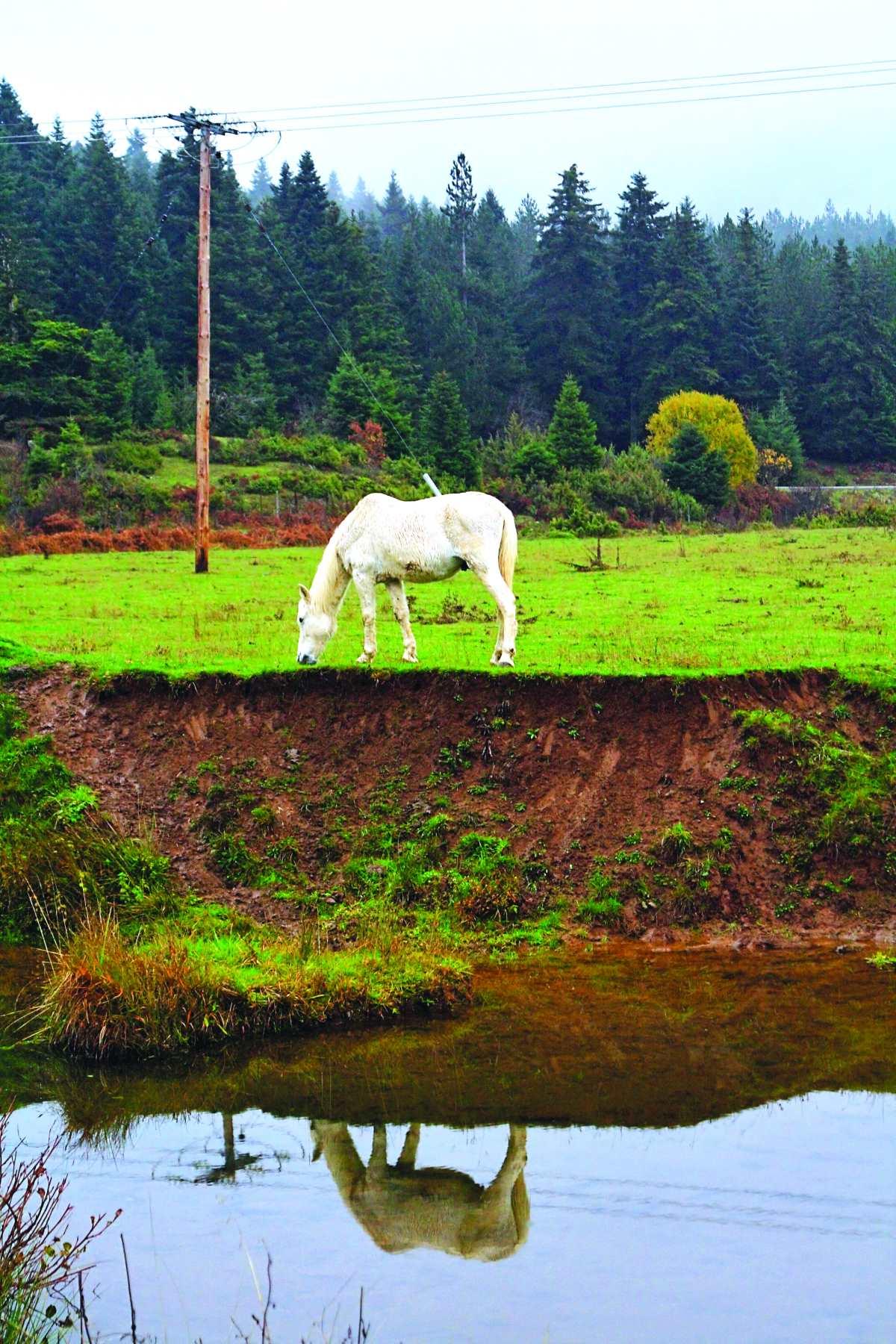 Άλογο στα Περτουλιώτικα Λιβάδεια
