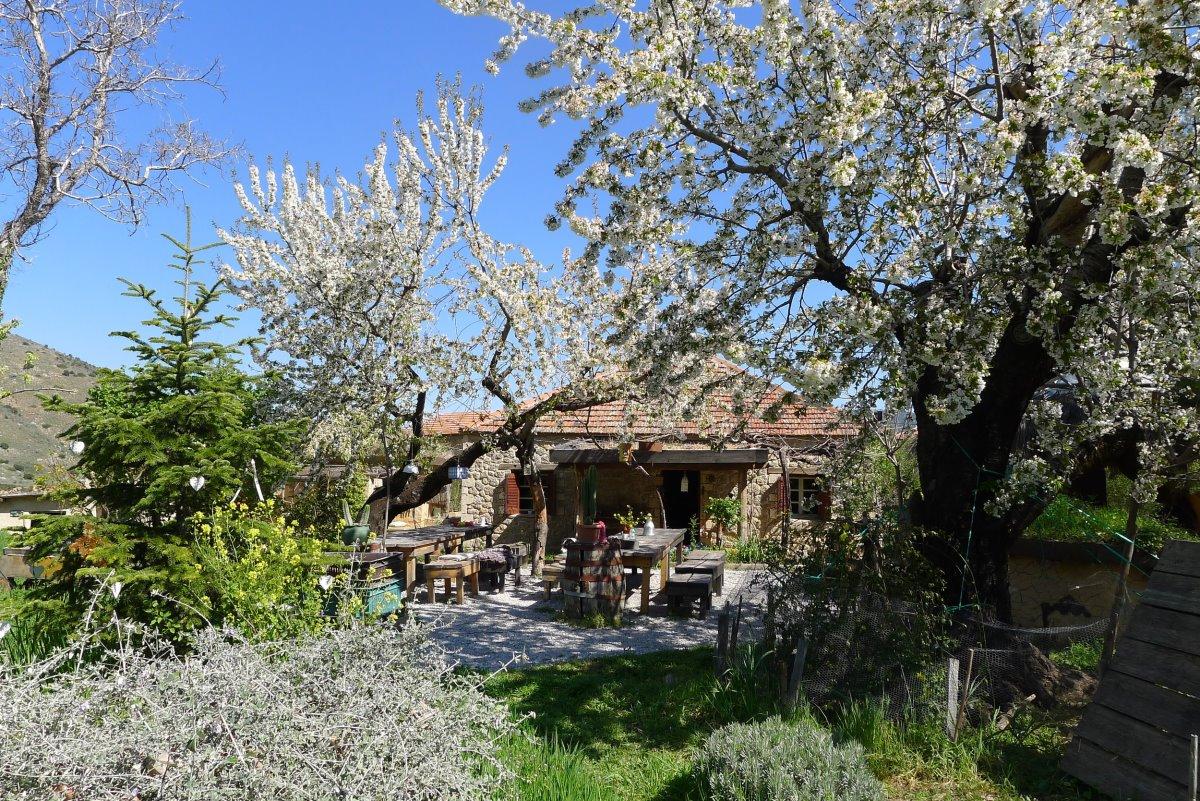 Σελιάνα χωριό στα ορεινά Αιγείρας διαμονή σε eco ξενώνα με ανθισμένα δέντρα