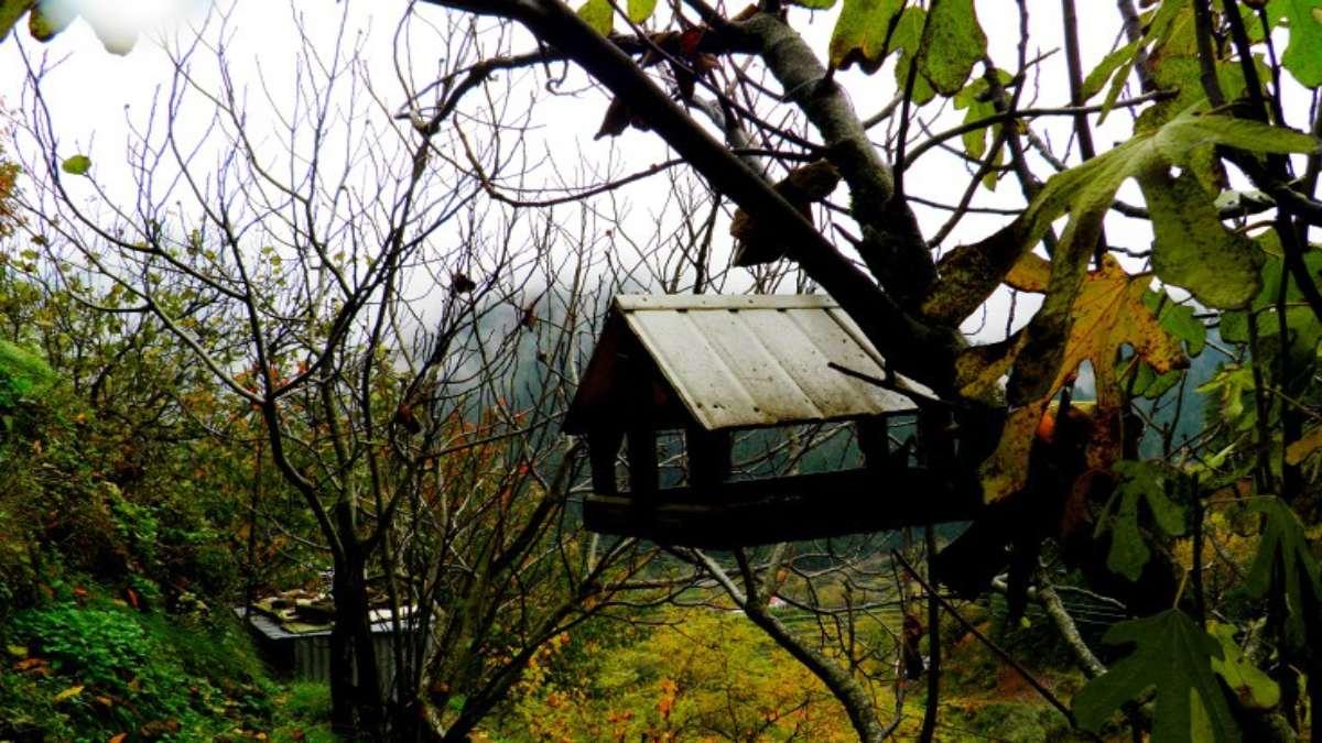 τόρνος χωριό Ευρυτανία δάσος κοντινό