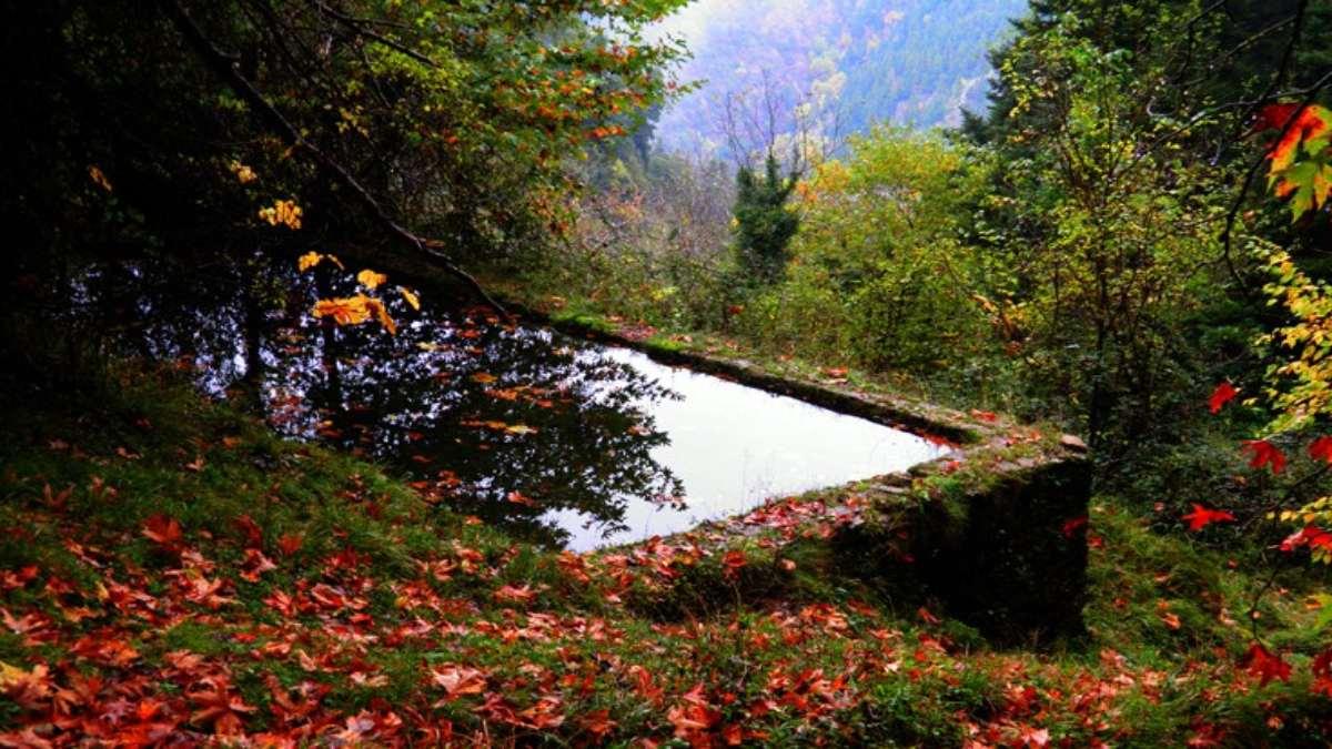 τόρνος ευρυτανία δάσος πηγή