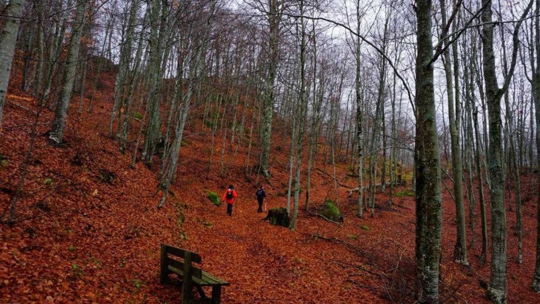 παρθένο δάσος Χαϊντούς Ροδόπη πεζοπόροι