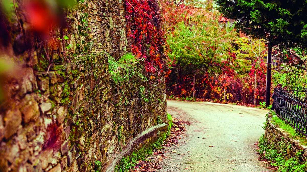 Φθινοπωρινό τοπίο σε δρόμο της Ζαγοράς,, Πήλιο