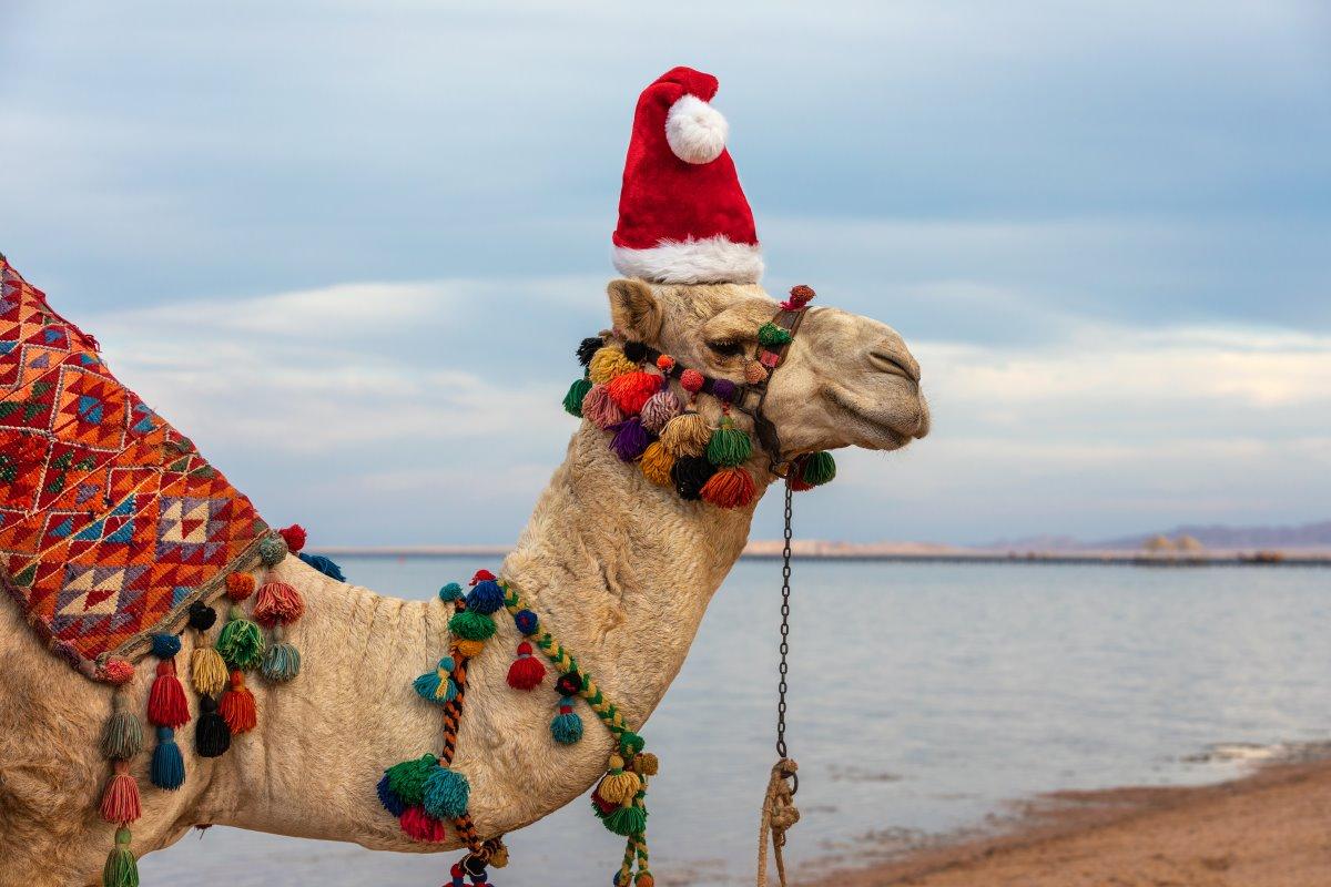 Χριστούγεννα Αίγυπτος