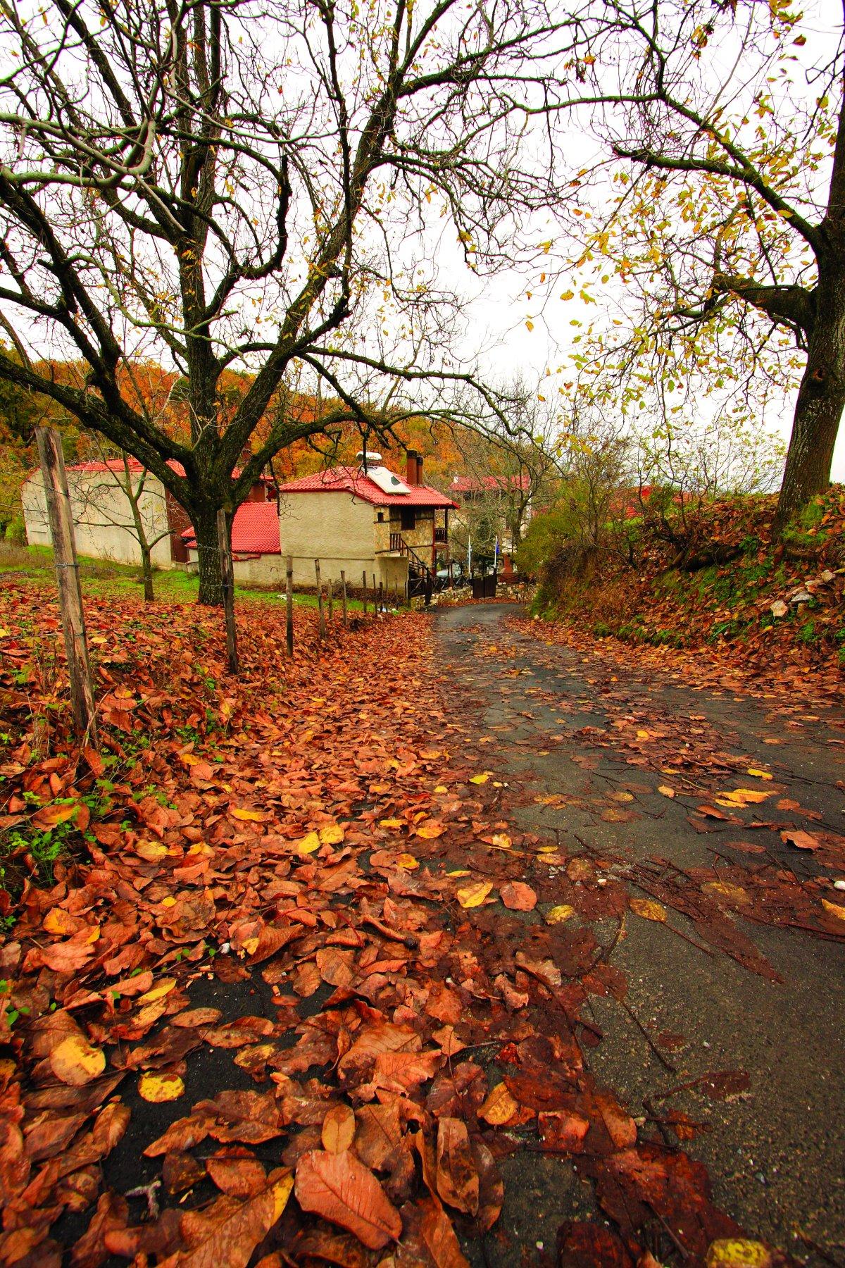 Ελατοχώρι Πιερίας με όμορφη φύση το φθινόπωρο