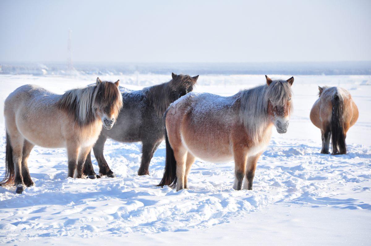 Oymyakon, Σιβηρία, Ρωσία