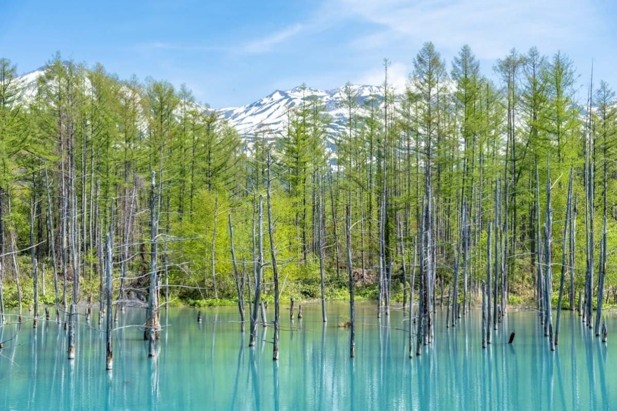 Blue Pond Λίμνη Ιαπωνία μπλε λίμνη με δέντρα στο νερό