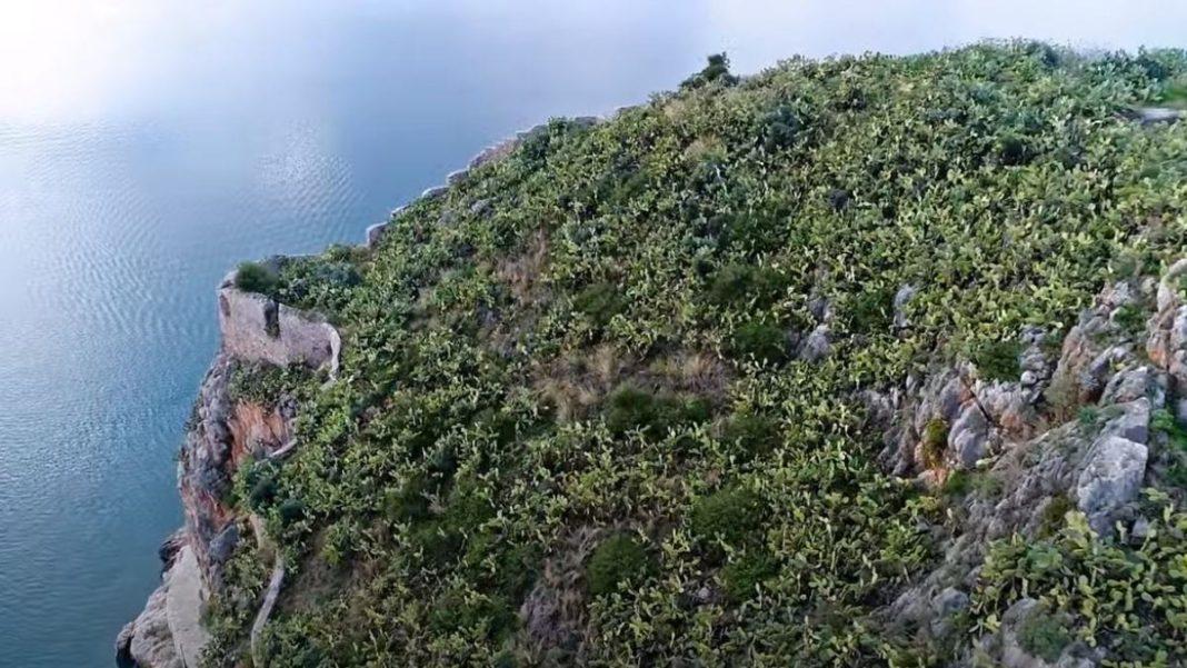 Ελληνικό δάσος με κάκτους