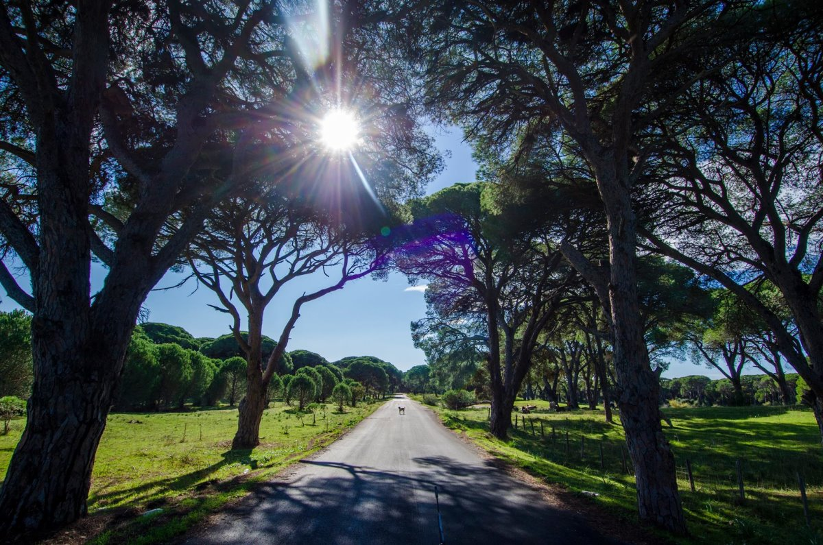 Δάσος Στροφυλιάς Πελοπόννησος το μοναδικό παραθαλάσσιο