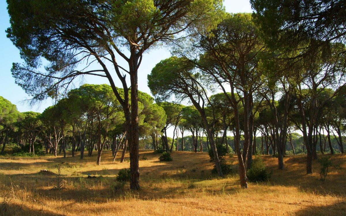 Δάσος Στροφυλιάς Πελοπόννησος οικολογικός παράδεισος