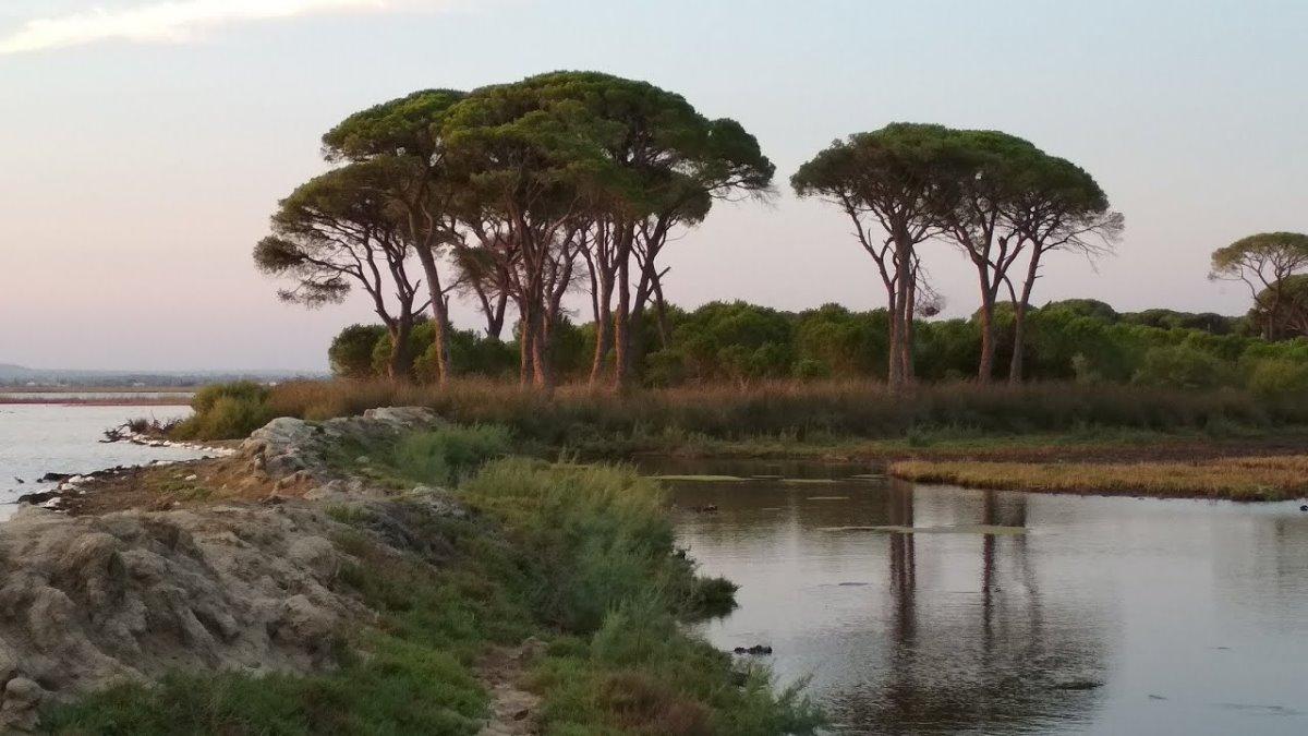 Δάσος Στροφυλιάς Πελοπόννησος παραθαλάσσιο δάσος μέχρι την ακτή