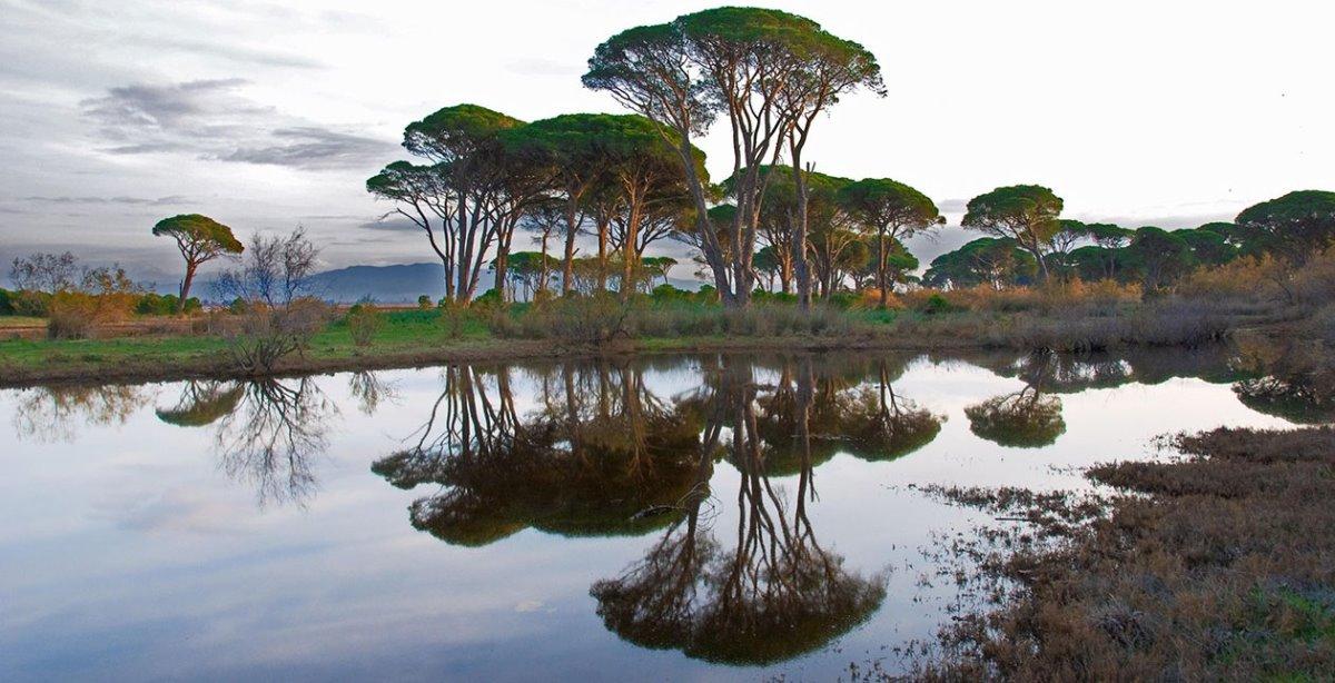 Δάσος Στροφυλιάς Πελοπόννησος με λιμοθάλασσα