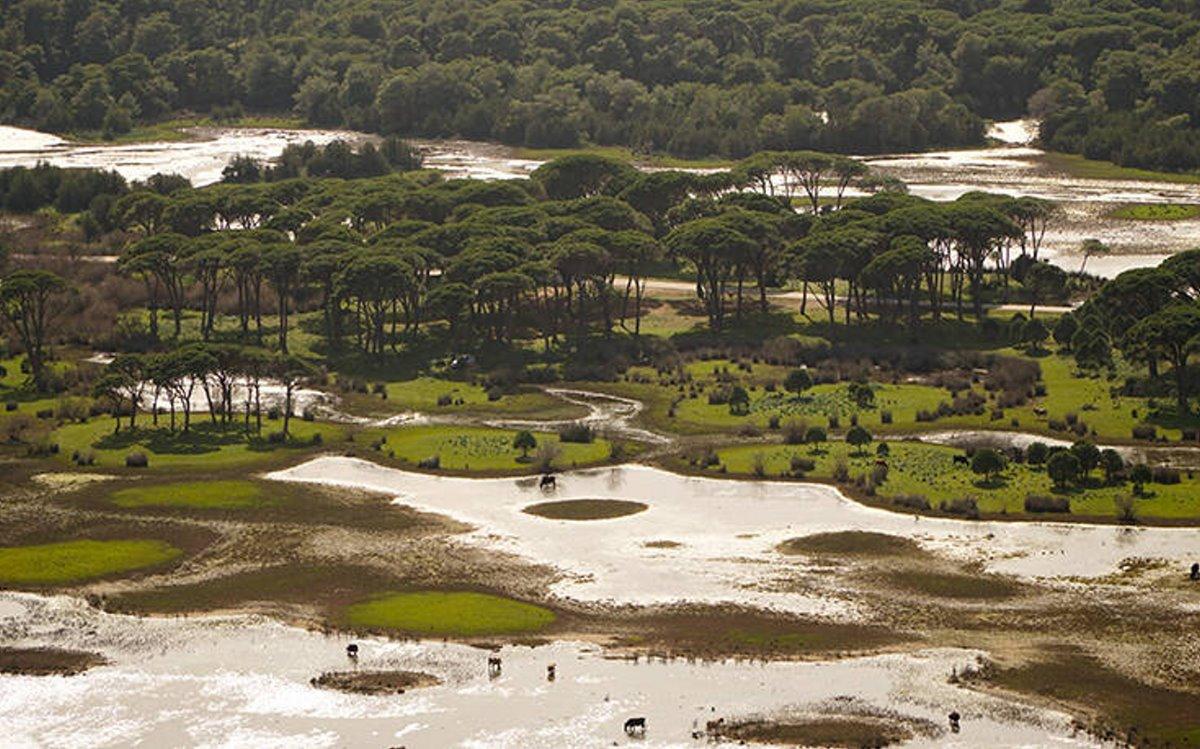Δάσος Στροφυλιάς Πελοπόννησος βιότοπος