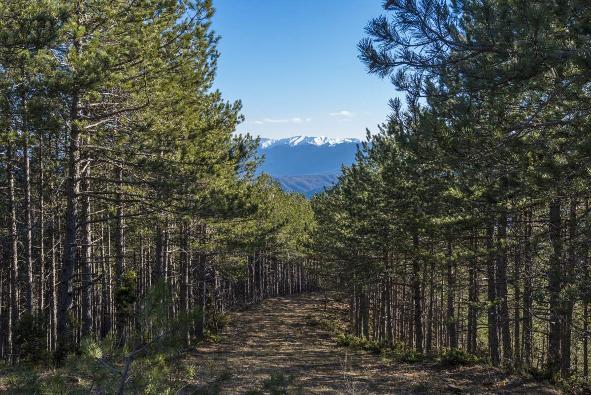 διαδρομή προς το Βραδέτο, μέσα στο δάσος