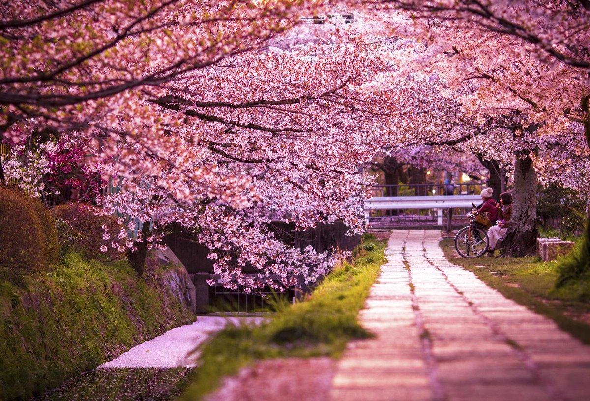 Διάσημοι δρόμοι στον κόσμο Κιότο ανθισμένες κερασιές