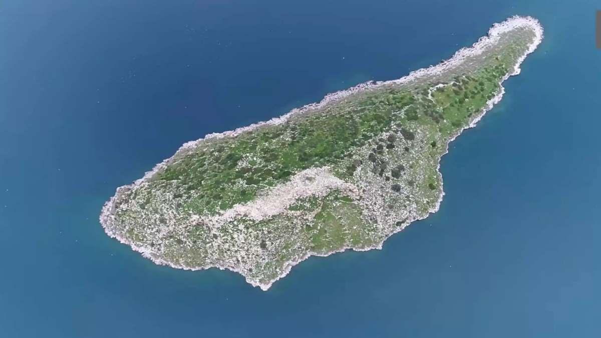 το γλαρονήσι είναι το δίδυμο αδελφάκι της Κύπρου
