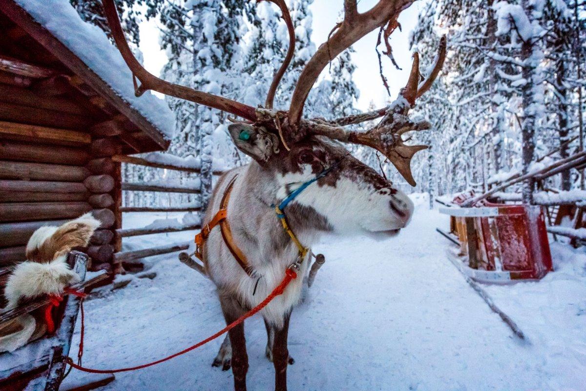 TUI Λαπωνία διακοπές στα χιόνια μια μοναδική εμπειρία που ακυρώνεται