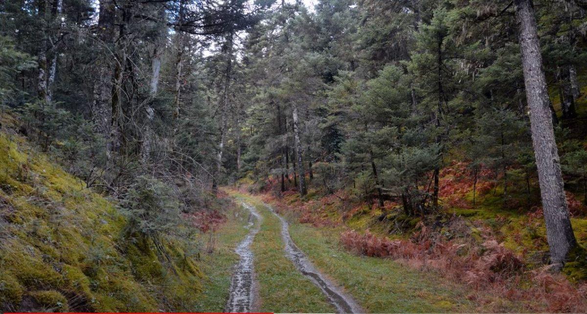Μέσα στο δάσος, Μαίναλο