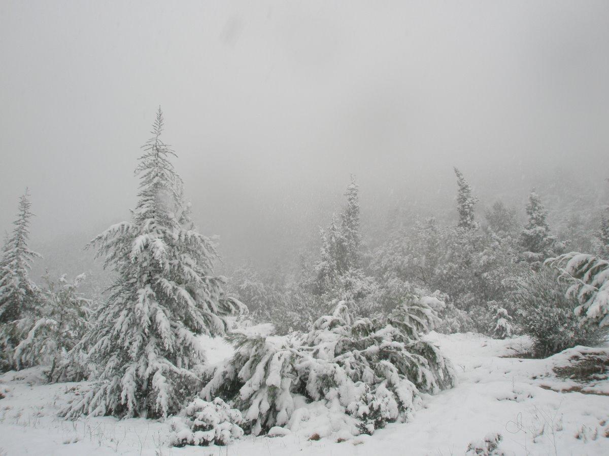 Νευροκόπι Σιβηρία χιόνια στη φύση