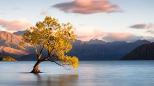 Νέα Ζηλανδία: Σε κατάσταση έκτακτης ανάγκης λόγω της κλιματικής αλλαγής
