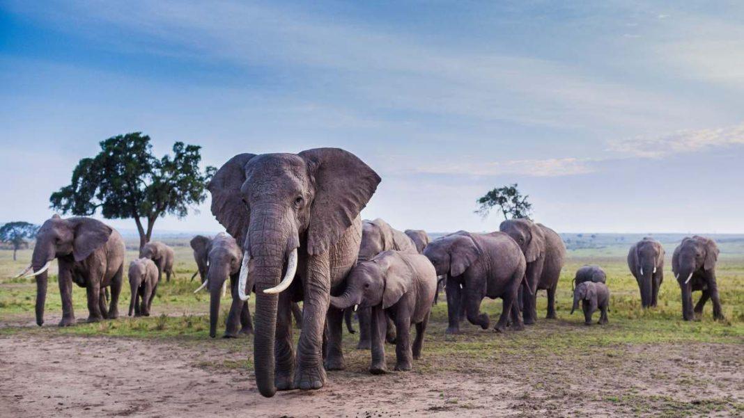 Noah Ark Πάρκο Νότια Αφρική ζώα