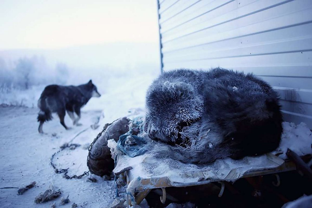 Oymyakon η πιο κρύα πόλη στον κόσμο με τα ζώα να παγώνουν στους δρόμους