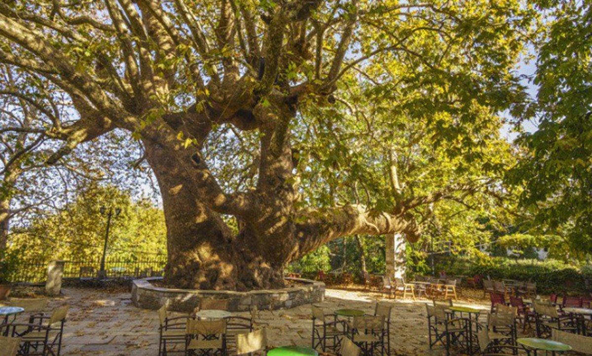 Minelska Resort Πήλιο κοντινή εκδρομή Τσαγκαράδα για τον γηραιότερο πλάτανο