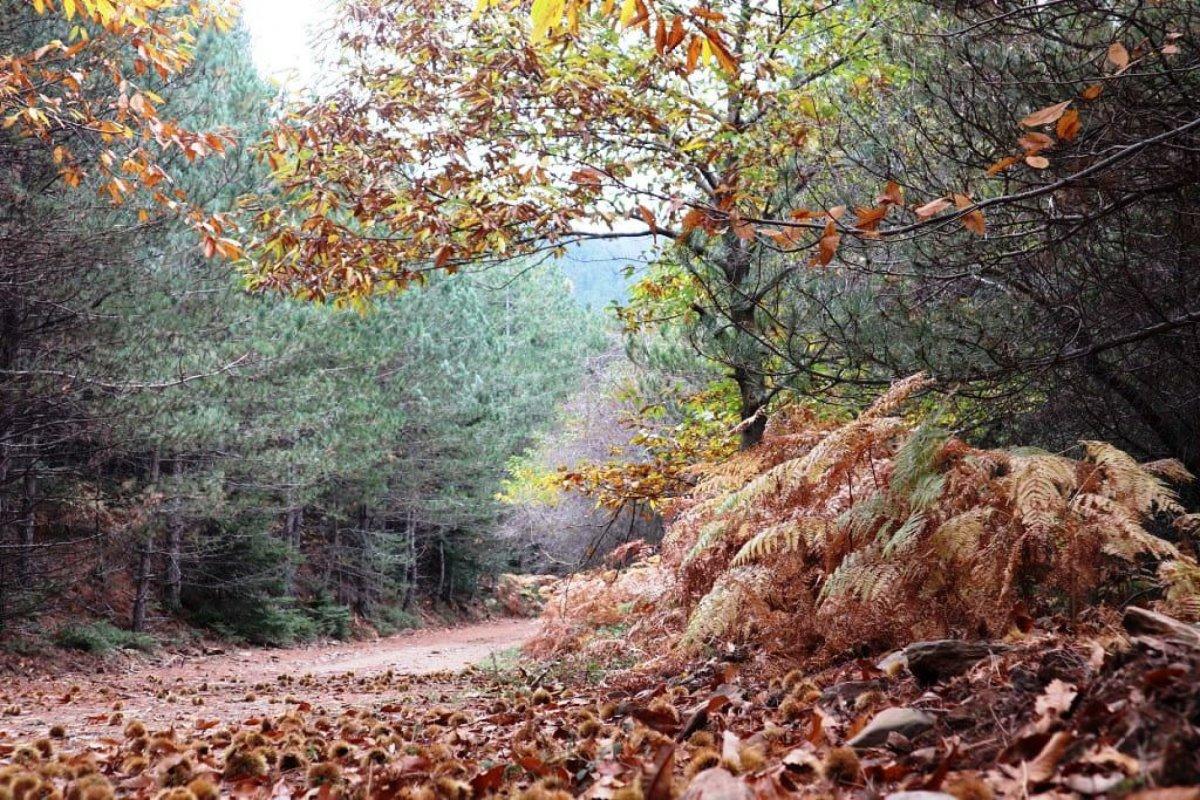 Στενωσιά Μεσσηνία χωριό με όμορφους καταρράκτες μέσα στο δάσος