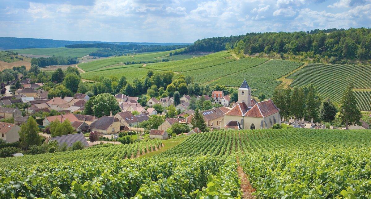 Αμπελώνες Ευρώπη Champagne Γαλλία