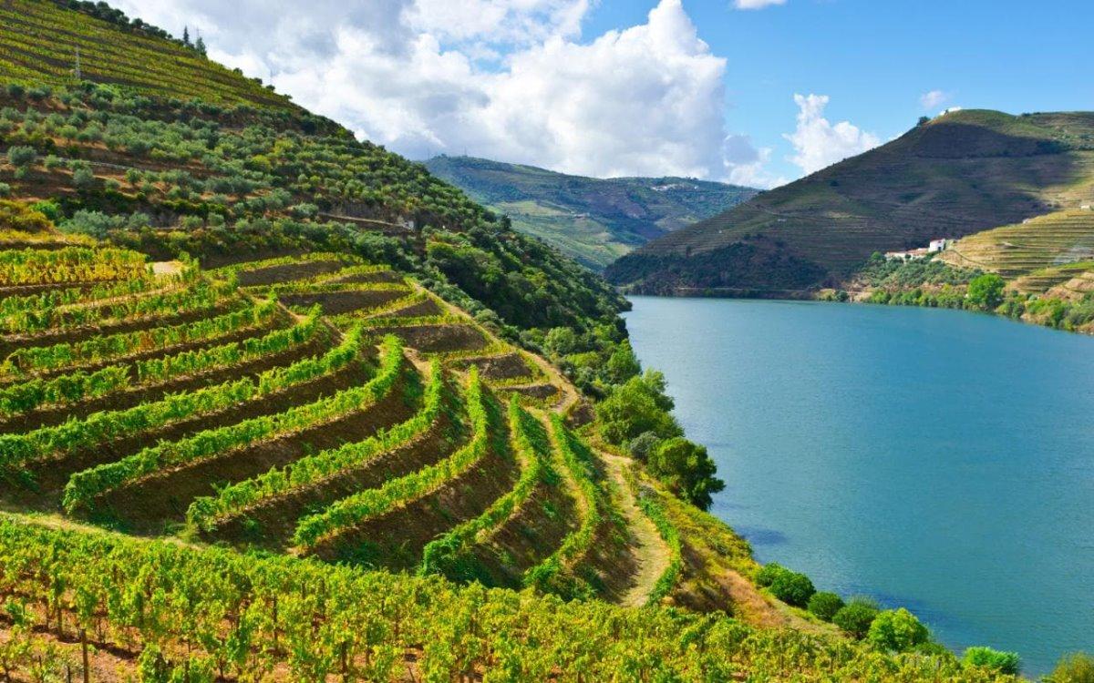 Αμπελώνες Ευρώπη  Douro αμπελώνες δίπλα στη θάλασσα