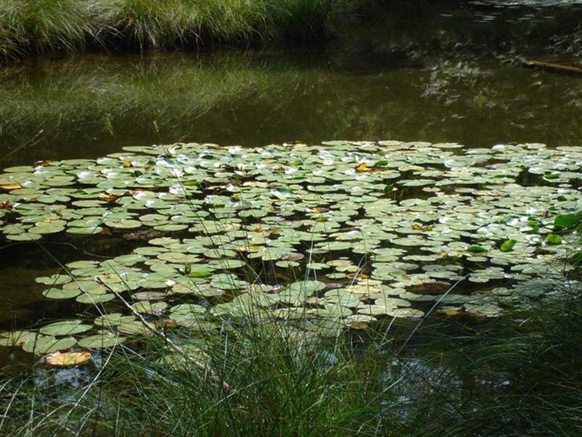 λίμνη Ζορίκα στο Ζαγόρι με νούφαρα